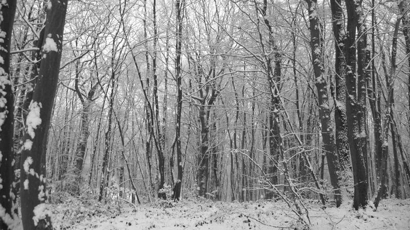 Dans les bois 25